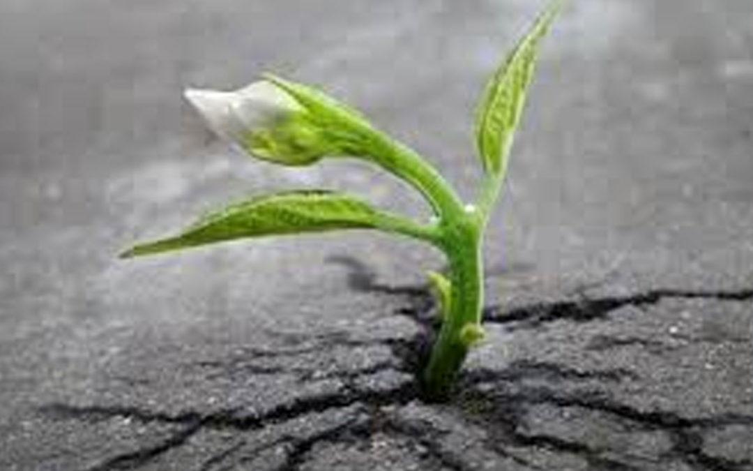 Regeneración: Dios nos renueva