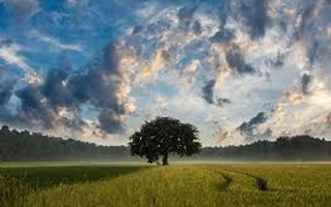 ¿Necesitan los cristianos preocuparse por el medio ambiente?